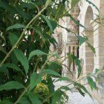 Abbaye-saint-amant-de-boixe-location-salle-cloitre-05